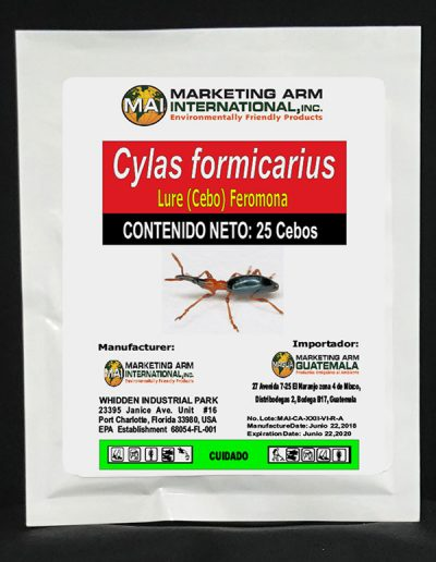 Cylas formicarius